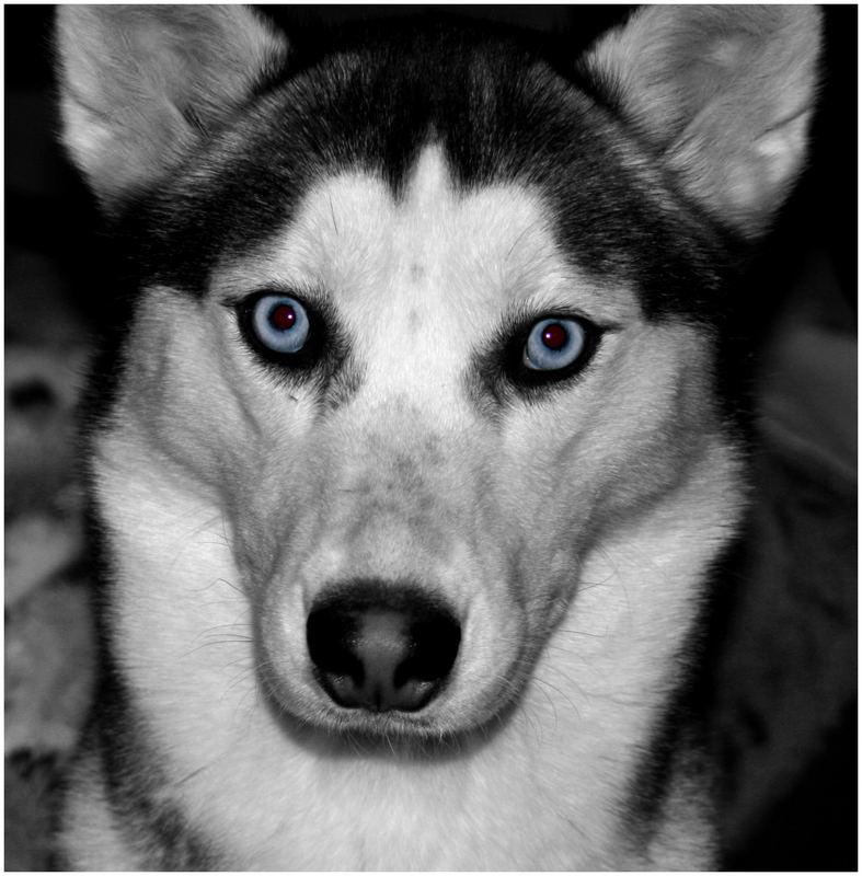 Das sind Augen !!!