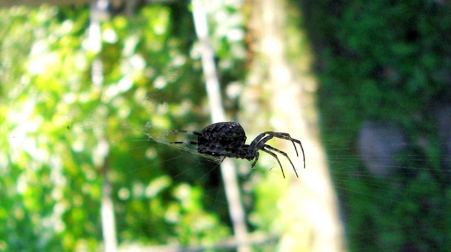 das sind die spinnen, mal sind sie draußen mal sind sie drinnen...