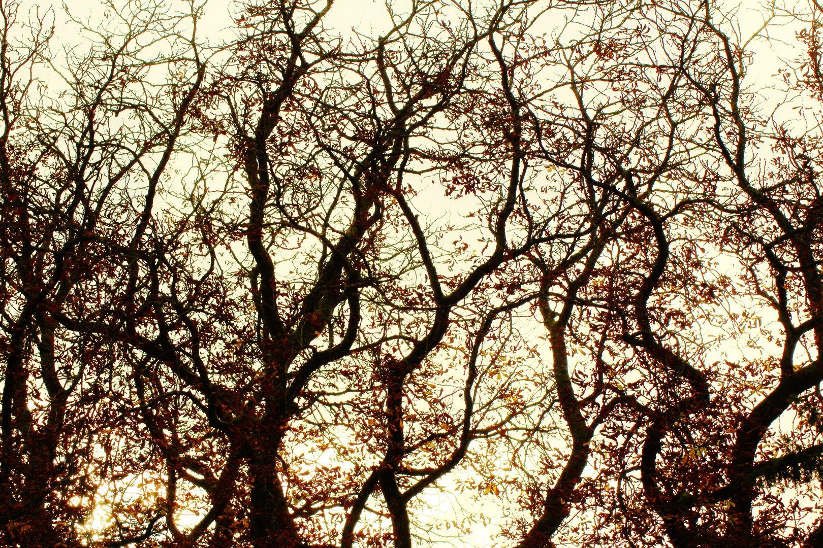 Das sind die Zweige...