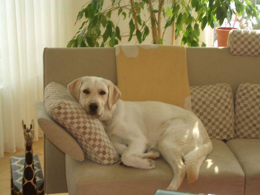 ...das Sofa gehört mir!