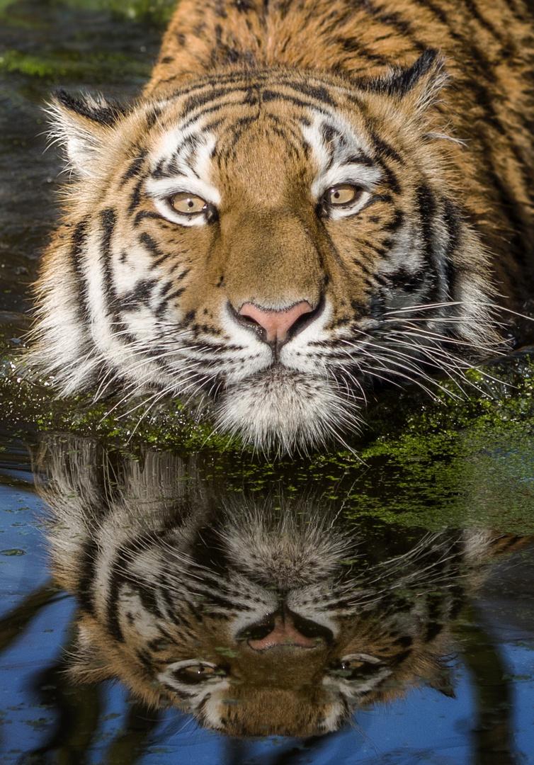 Das Spiegelbild ....