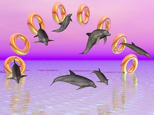 das Spiel der Delfine  . . .