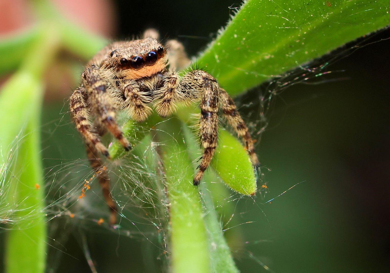 Das Spinnchen...