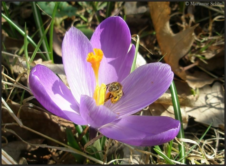 Das Summen der Bienen....