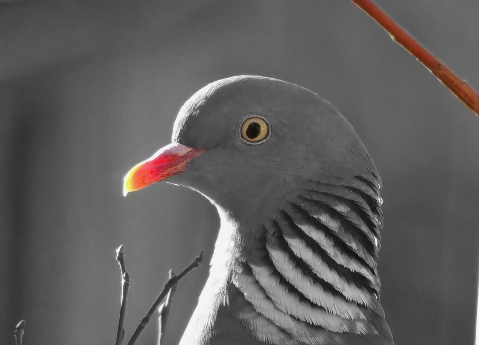 Das Taube Traudel