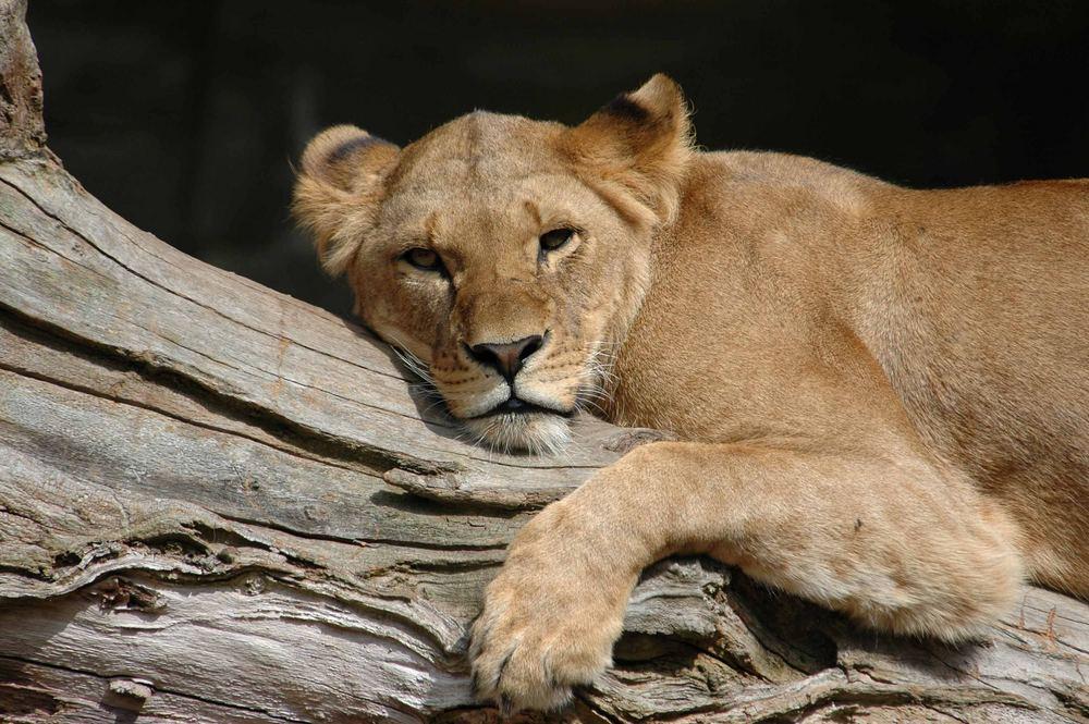 Das typische Foto aus dem Tierpark