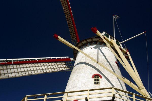 Das typischste Mitbringsel-Foto aus Holland.....