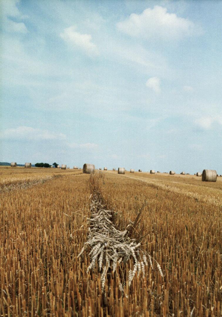 Das vergessene Korn