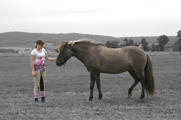 Das Verhältnis von Mensch und Pferd