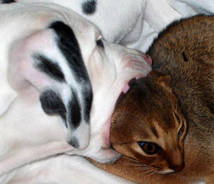 Das Verhalten von Hund und Katz ...