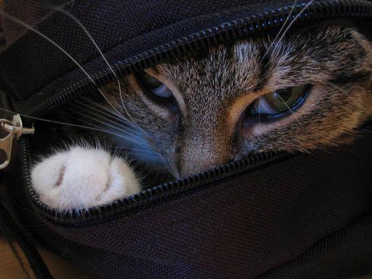 Das Versteck
