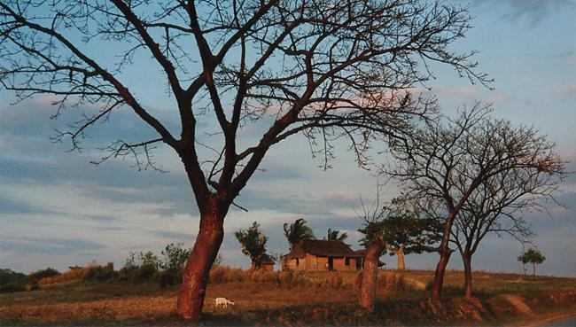 Das Vinales Tal in Cuba. Mi paradiso2