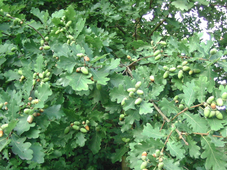 das Vorgrün des Herbstes 2009