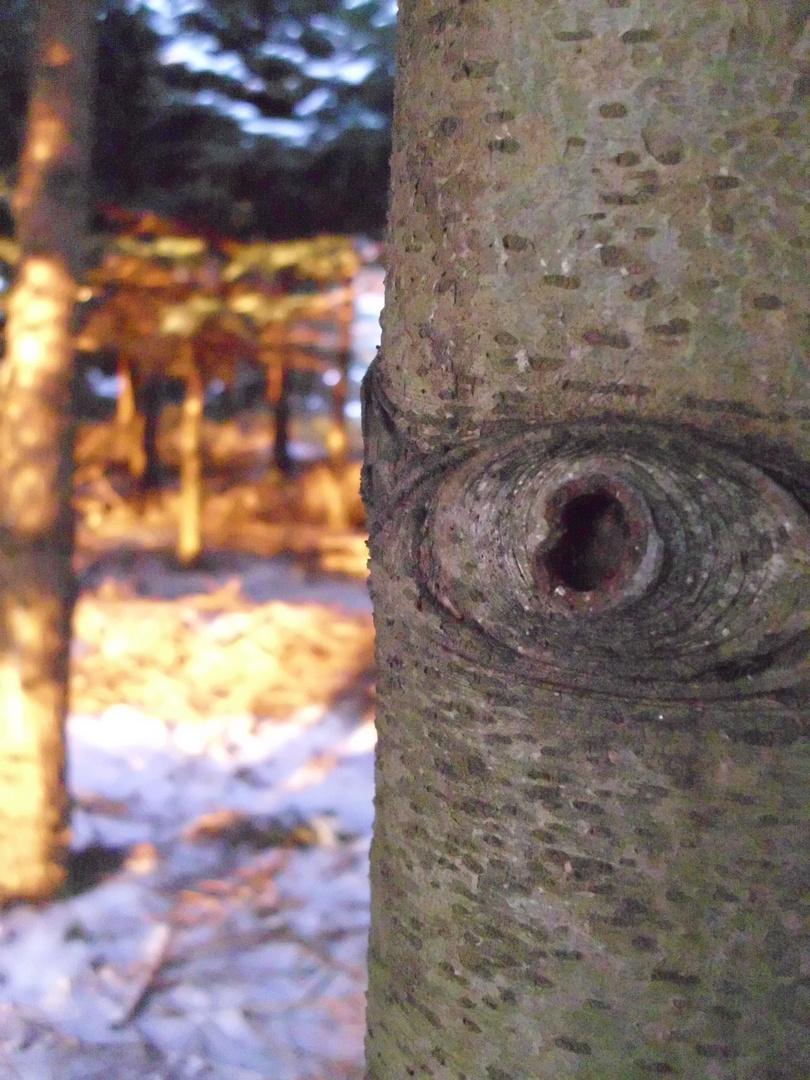 Das wachsame Auge des Waldes