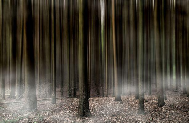 Das Waldbild