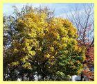 Das war der Herbst!