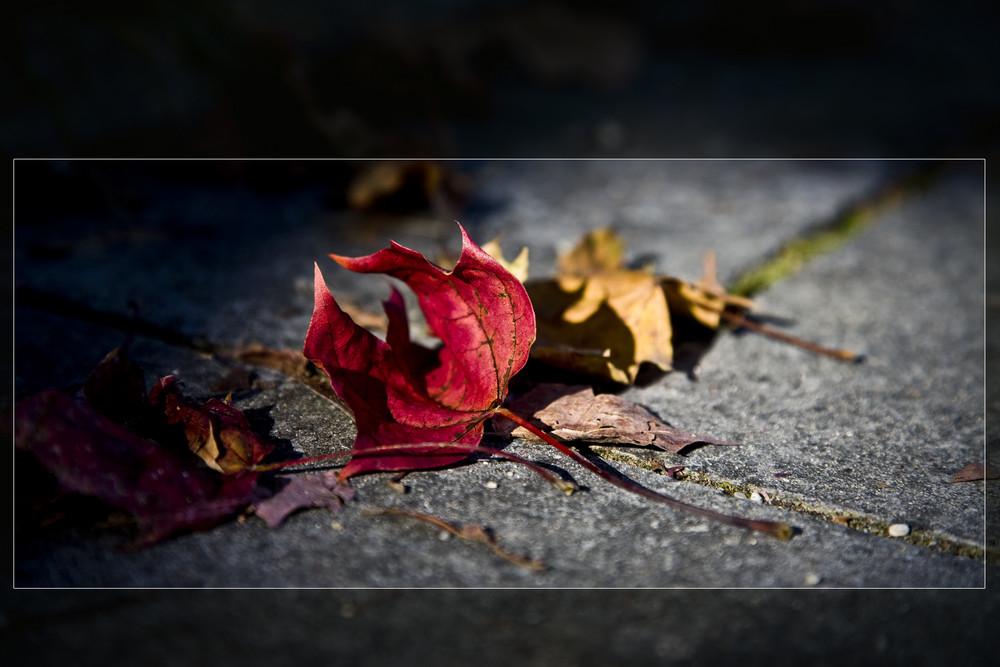 das war der Herbst