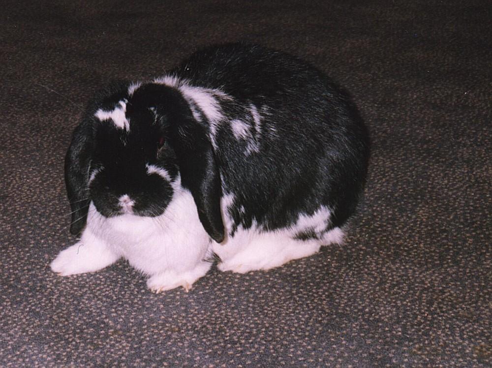 Das war mein Kaninchen Nicky
