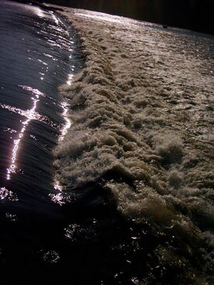 Das Wasser fällt nicht weit vom Stamm...