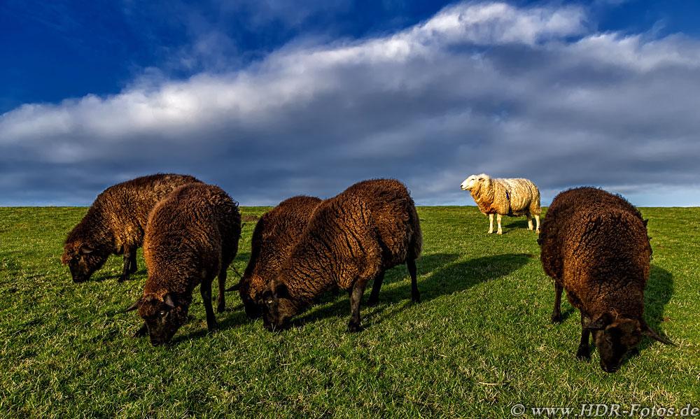 Das weiße Schaf in der Familie (RAW-Bearbeitung)