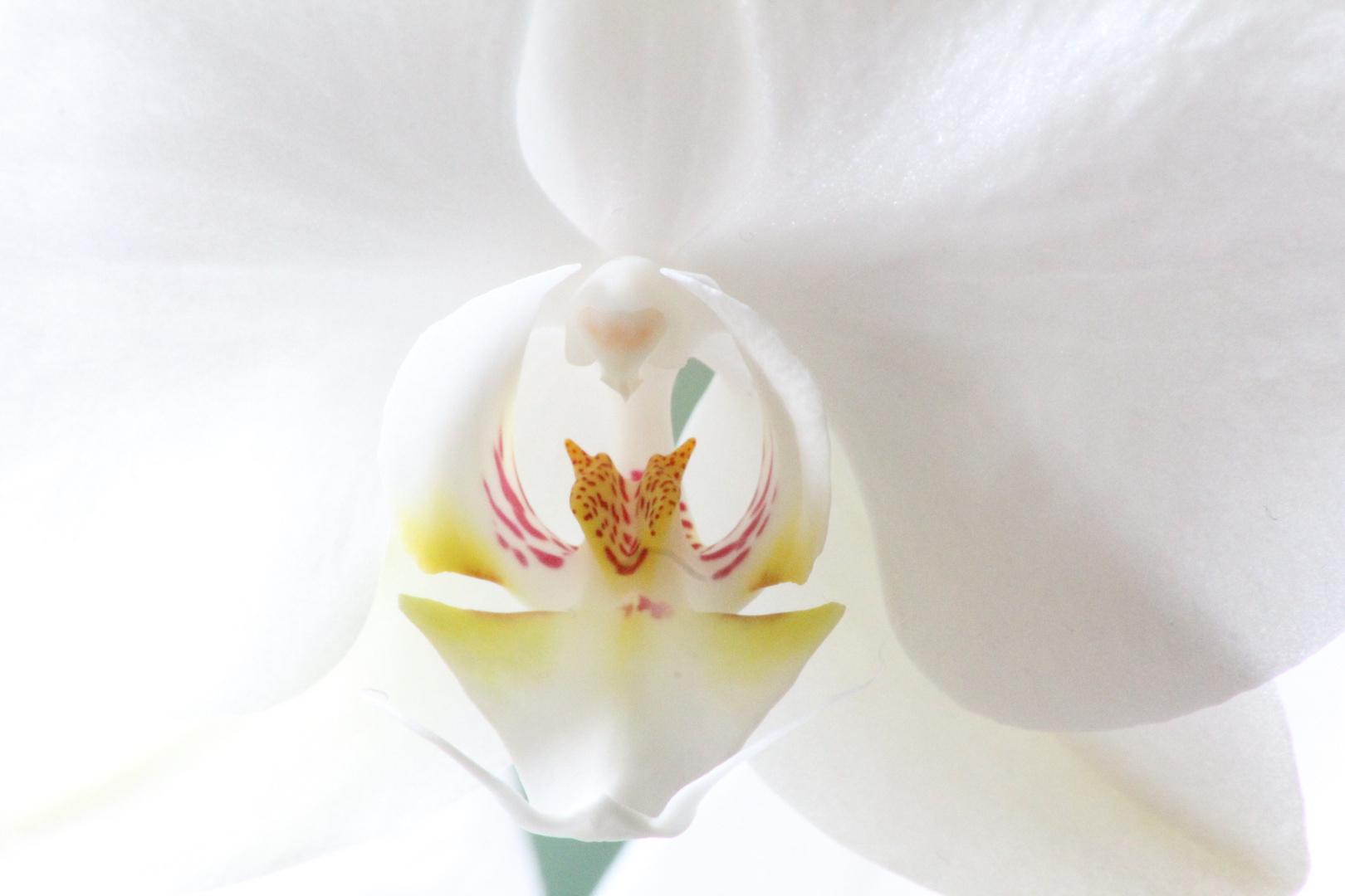 Das Wesen in der Blume!