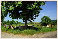 Das Wetter haut die stärksten Kühe um.....