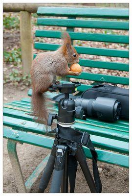 Das wichtigste für den angehenden Naturfotografen....