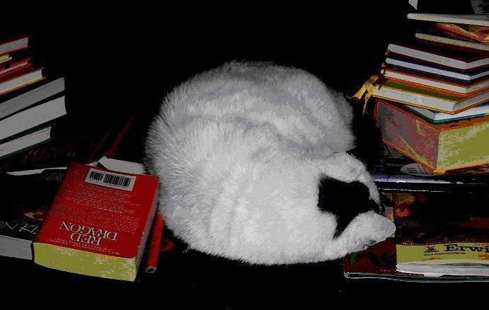 Das Wichtigste im Leben - Katzen und Literatur!