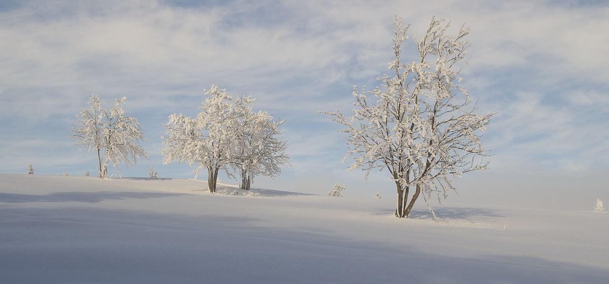 Das Wintermärchen
