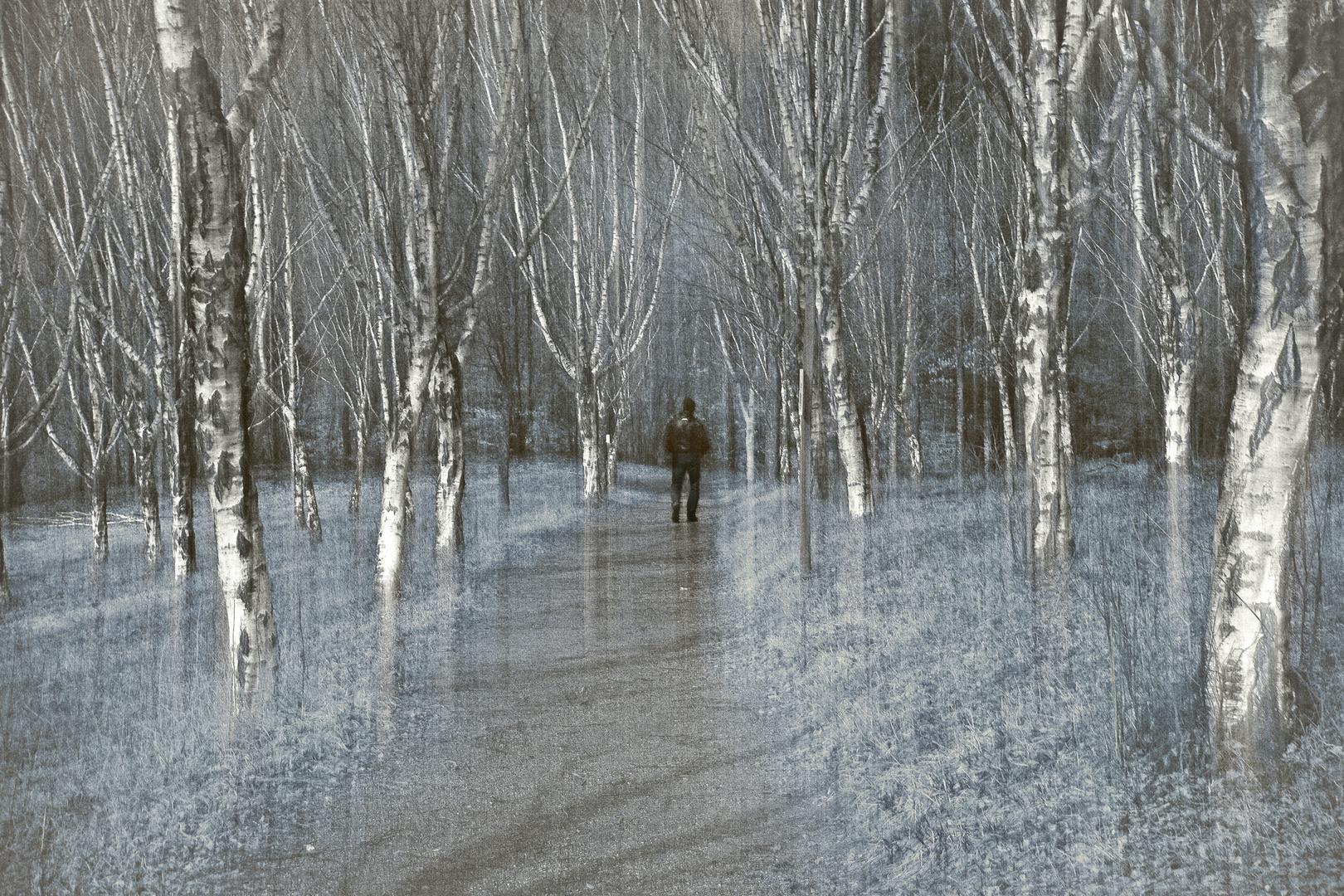 das Wirken der Birken