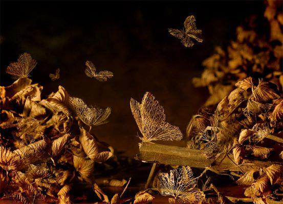 Das Wispern ihrer Flügel...