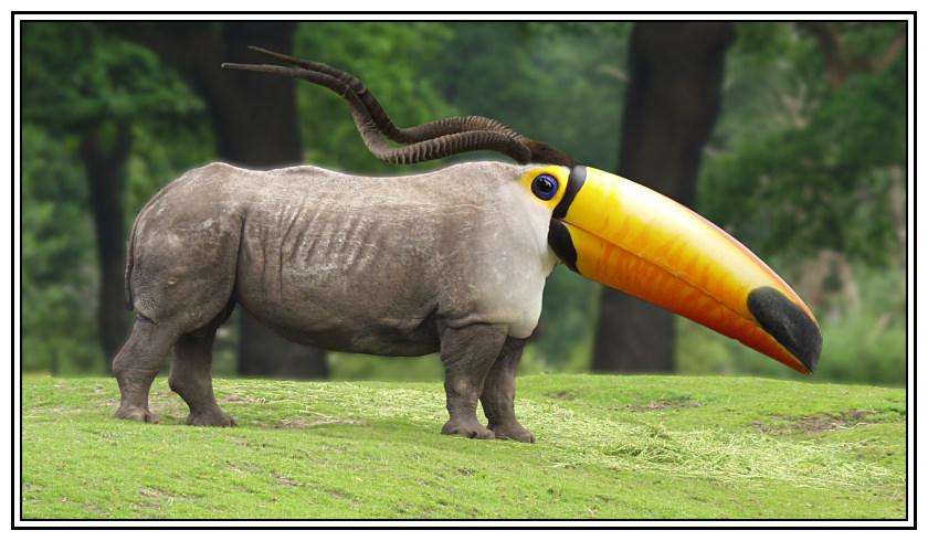 ... das wohl längste Nashorn im Universum