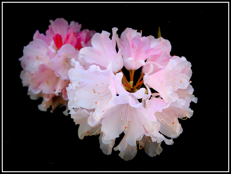 das wollte einen Rahmen ;-) Foto & Bild   pflanzen, pilze & flechten ...