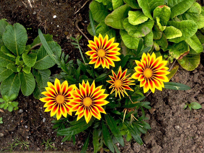 Das Wunder im Garten