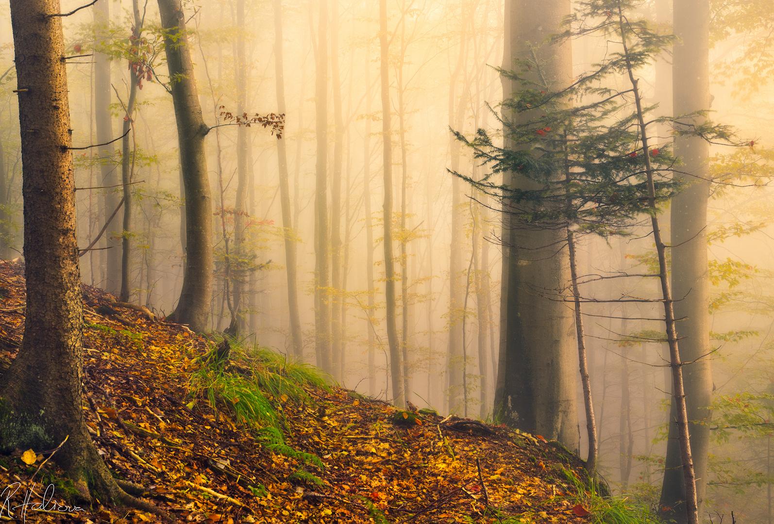 Das Wunder vom Herbst