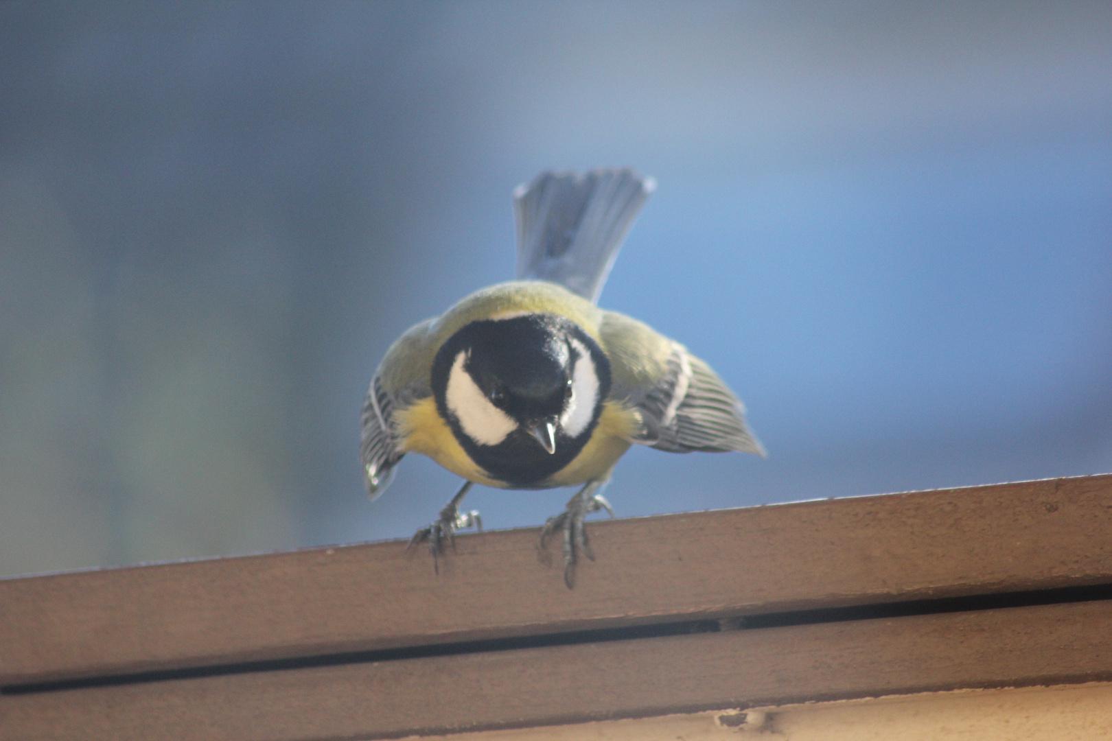 Das zweite Wesen im Vogel!