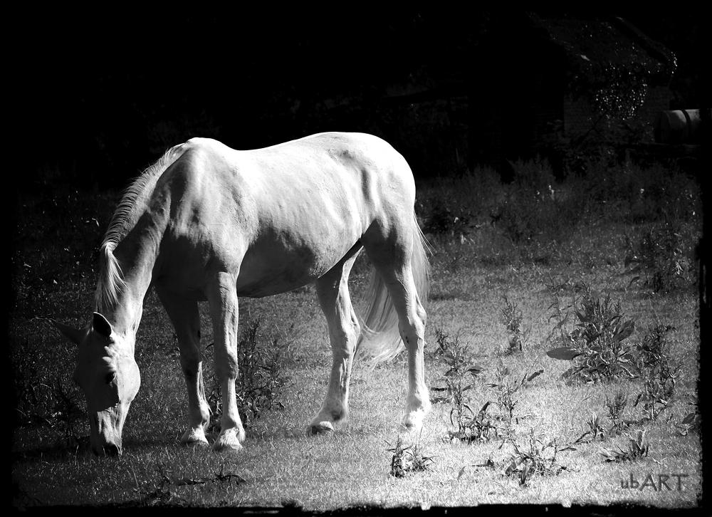 """Das""""Alte""""Pferd"""