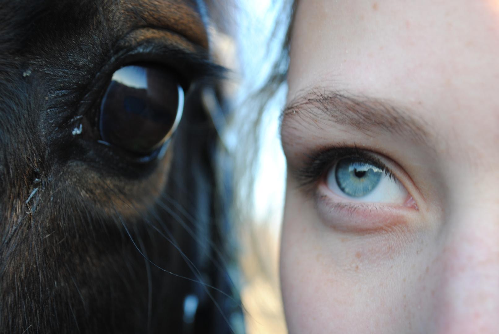 Dass das Pferde....