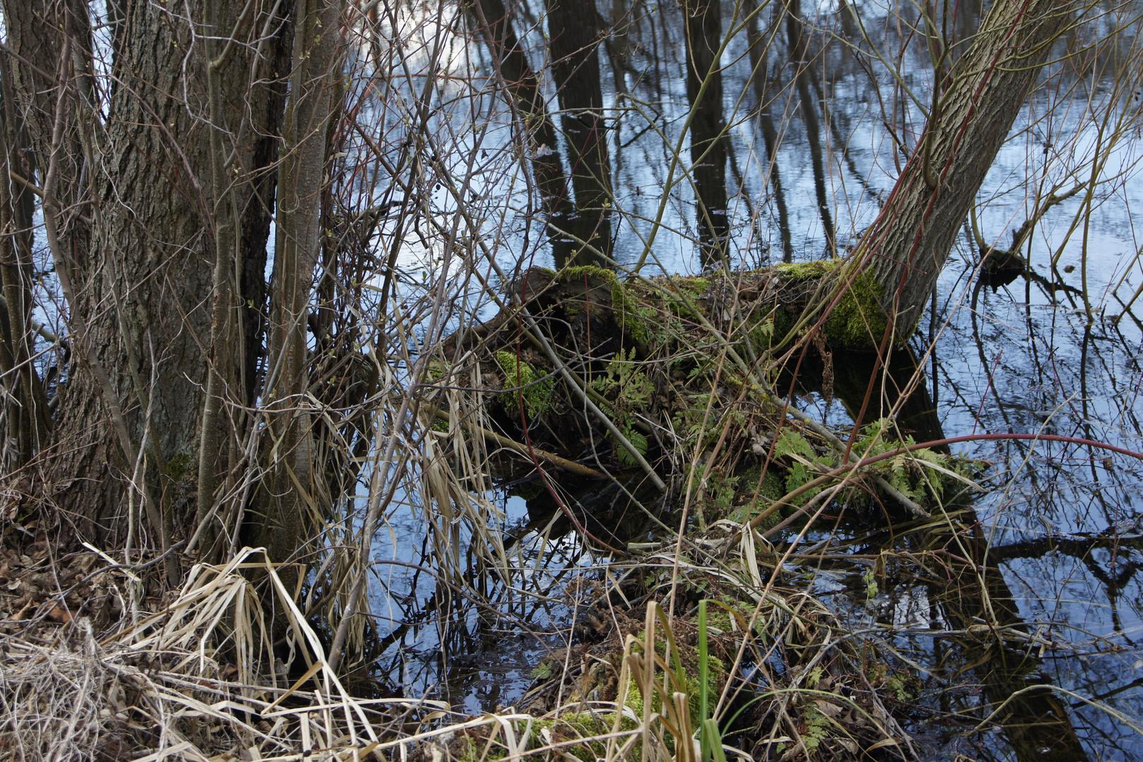 Dat zeuch im Teich