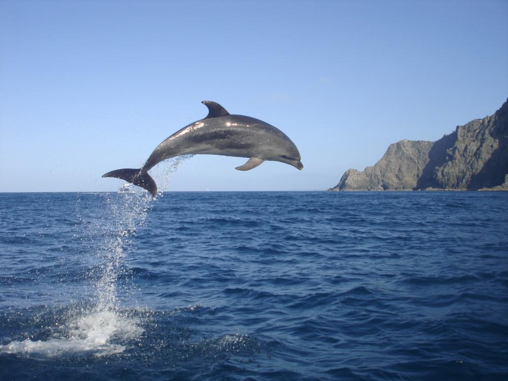 Dauphin photo et image animaux animaux sauvages for Koi qui saute hors de l eau