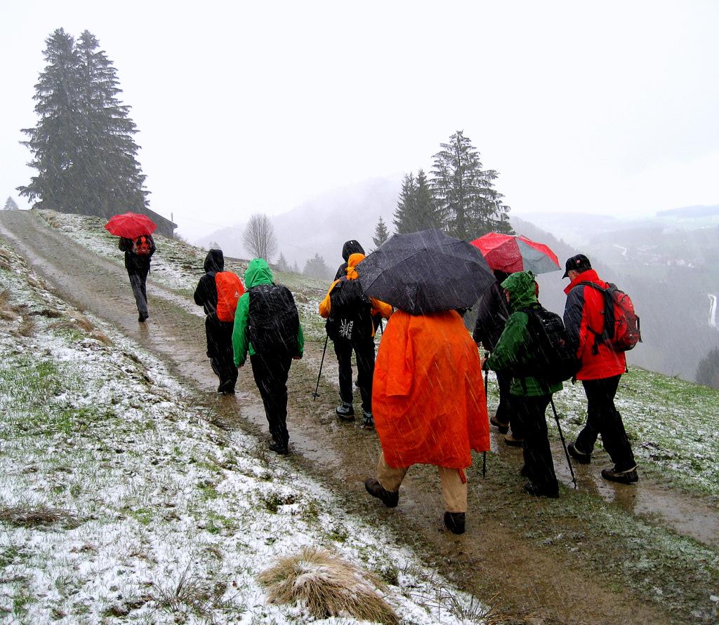 DAV-Frühjahrswanderung Krokuswiese Oberstaufen
