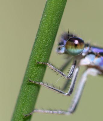 De beaux yeux bleus