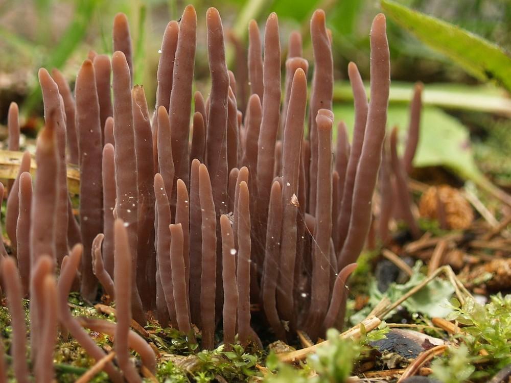 de champignon forêt