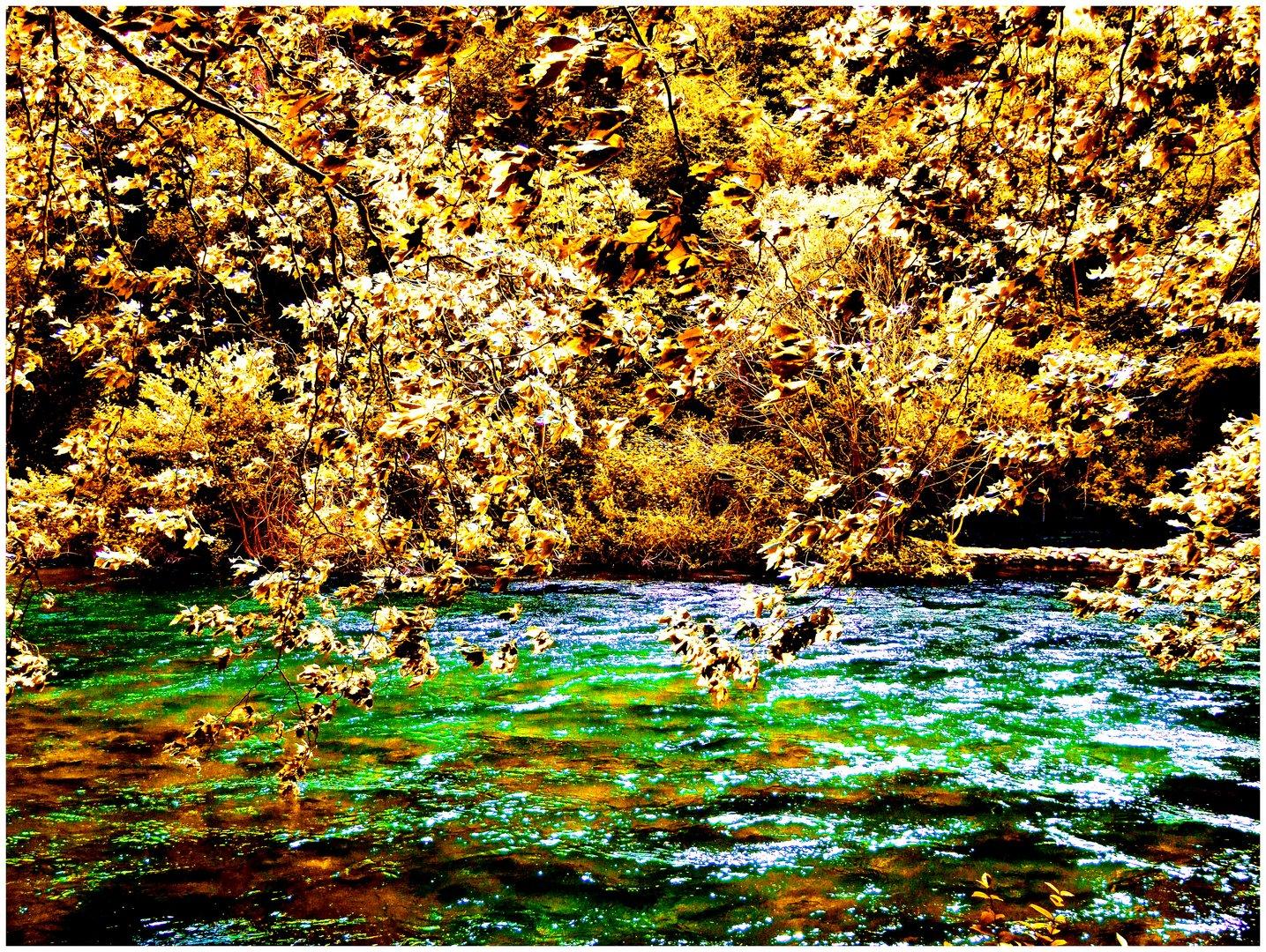 De feuilles et d'eau