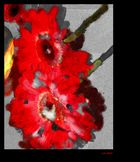 De las flores y otros disparates 3.