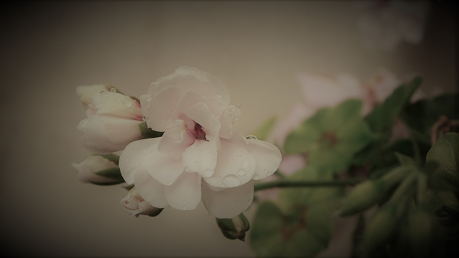 de mi jardin