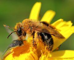 de nombreux pollens
