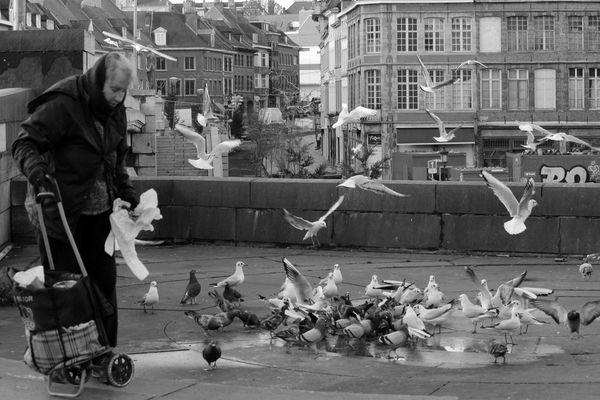 De oude vrouw en duiven