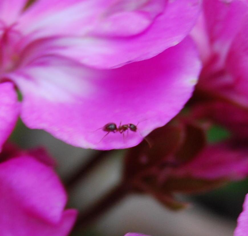 De paseo por la flor