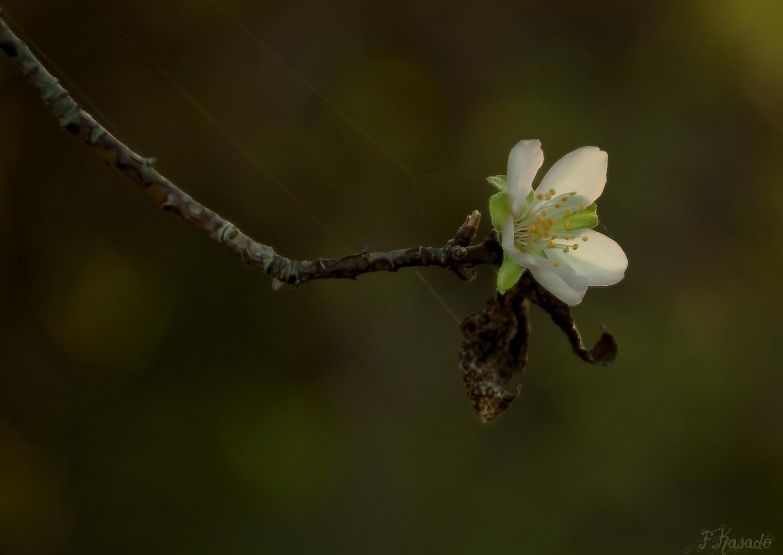 De Primavera